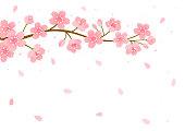 flower,branch,tree,cherry blossom,nature,spring,pink,illustration,background,design