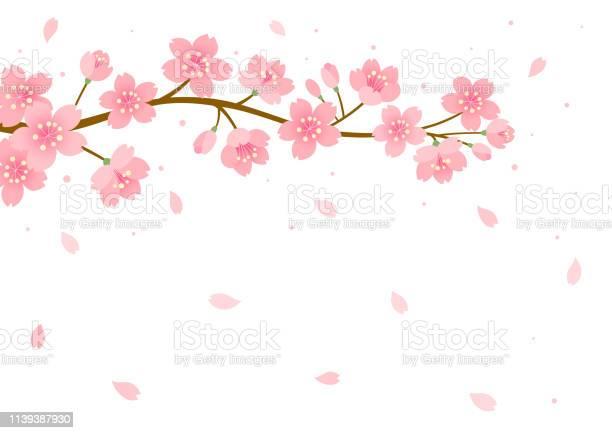 Cherry Blossom Achtergrond Stockvectorkunst en meer beelden van Abrikoos