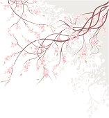 Cherry Blossom Branch. Vector Illustration