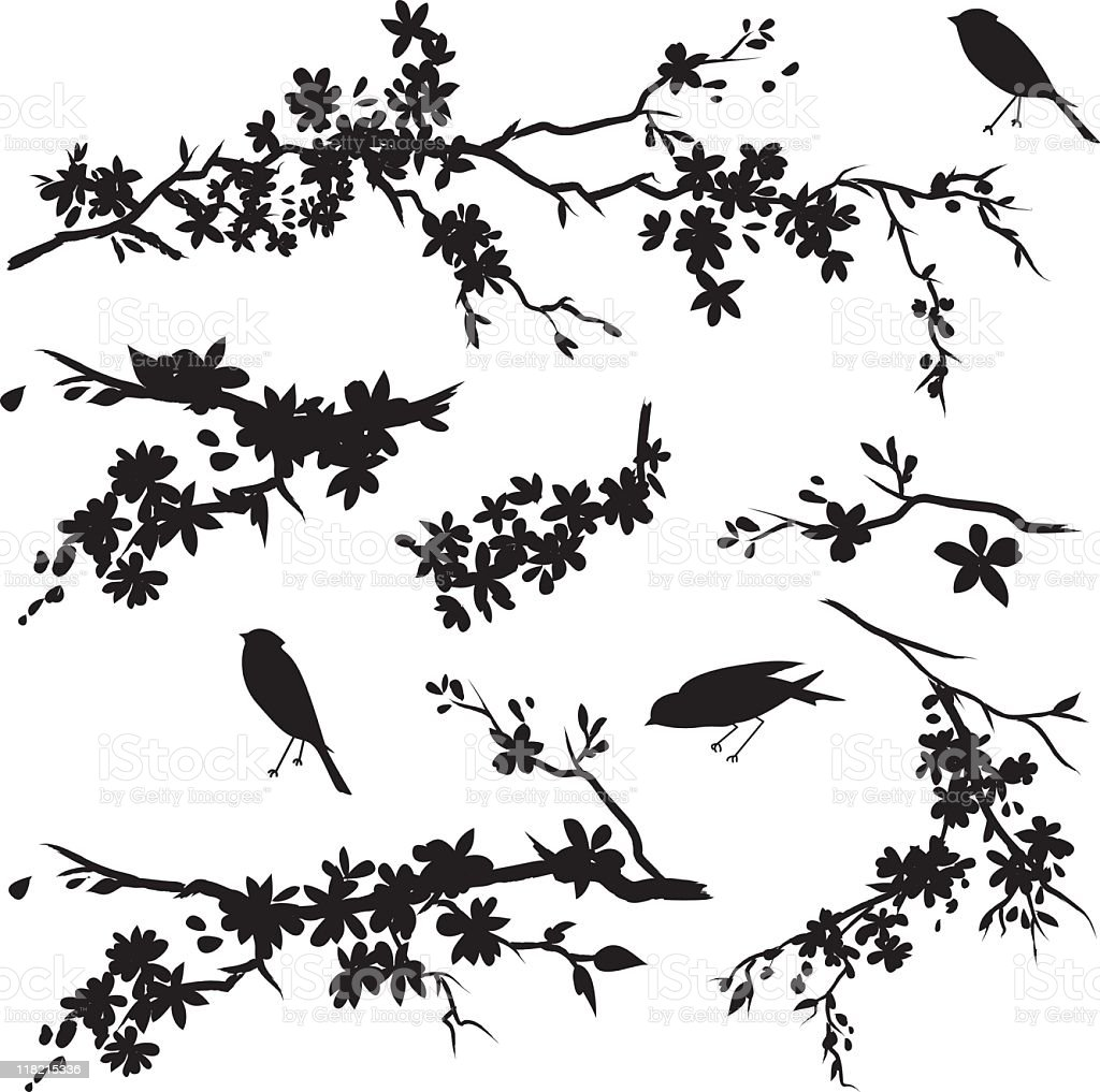 Cherry Blossom Branches in Bloom & Birds Black Silhouette vector art illustration