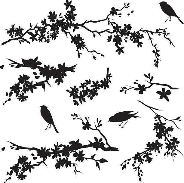 Cherry Blossom Branches in Bloom & Birds Black Silhouette Cherry blossoms Sparrows & Sakura. Three Black Sparrow and Cherry Blossoms Branches Silhouettes. Cherry blossom branches has flowers in bloom.  The cherry Blossom branches and flowers are various sizes. some of the Branches are simple while others are more detailed. branch plant part stock illustrations