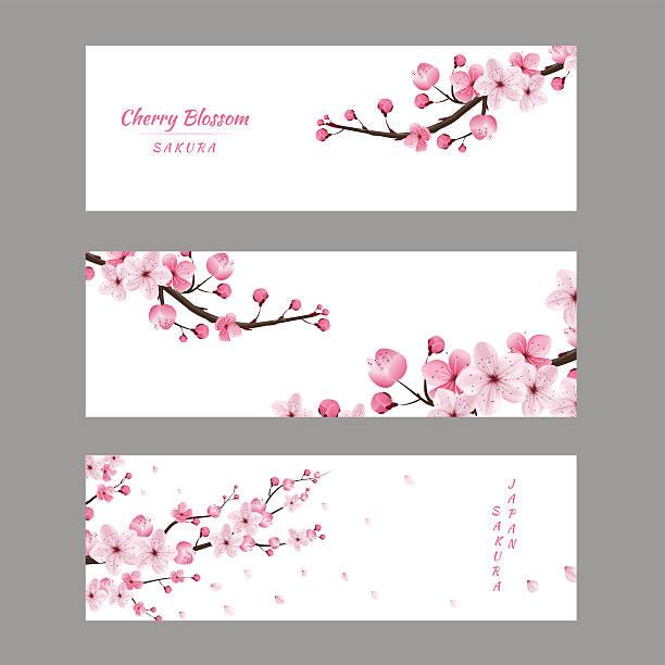 cherry blossom collection vector art illustration
