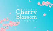 Cherry Blossom Festival (In Japanese character) vector illustration. Sakura branch with petals falling on blue sky background.