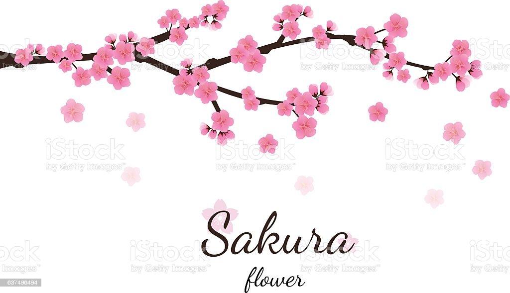 Cherry blossom flowers background. Sakura  pink flowers  backgro vector art illustration