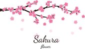 Cherry blossom flowers background. Sakura  pink flowers  backgro
