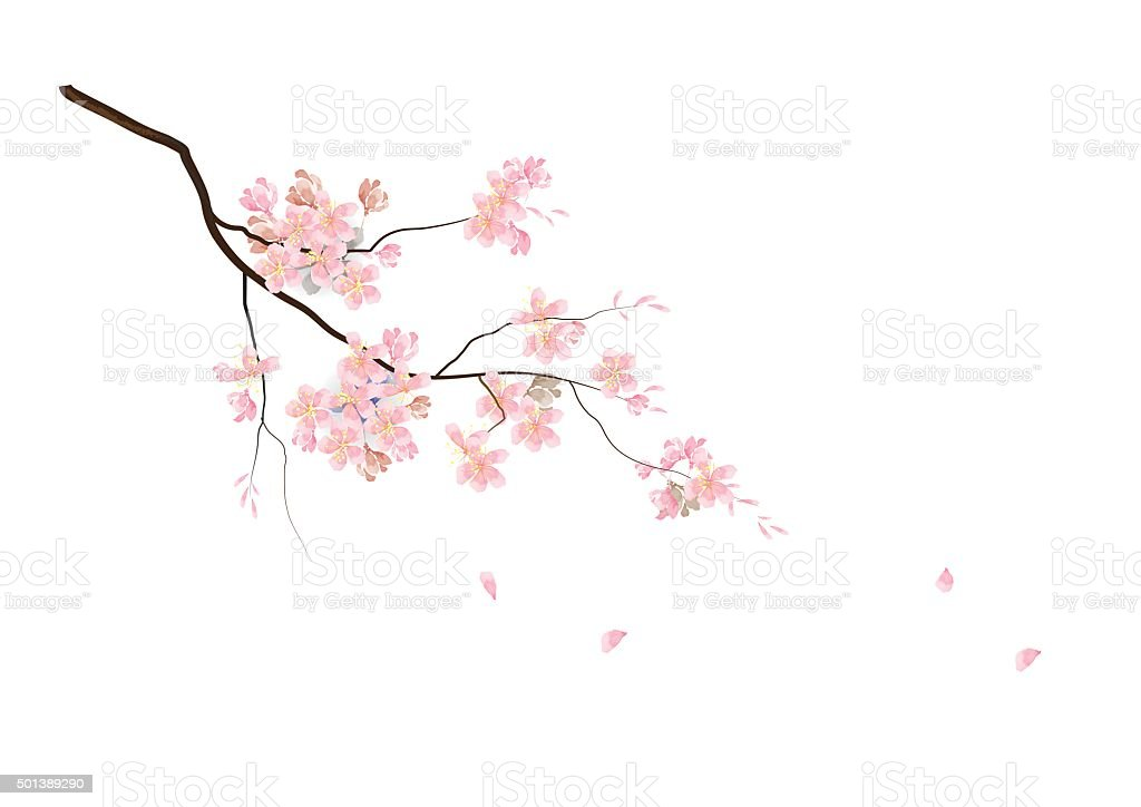 Cherry blossom flowers with branch pink color watercolor look