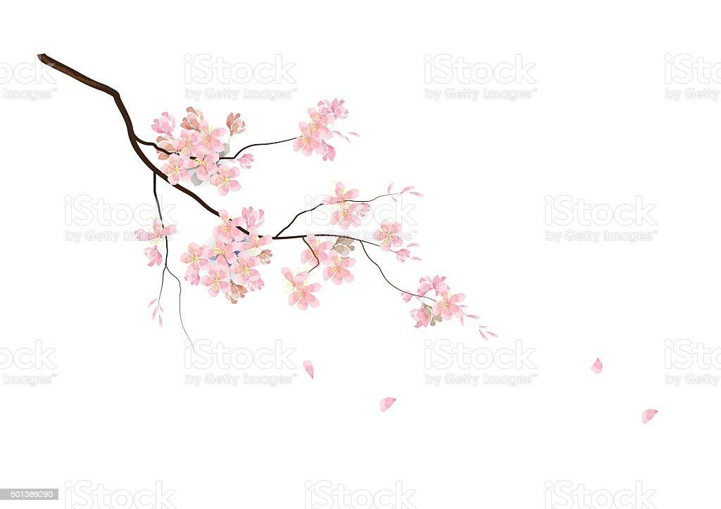 royalty free cherry blossom clip art vector images illustrations rh istockphoto com cherry blossom clipart cherry blossom clip art free