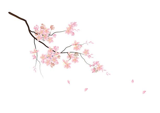 stockillustraties, clipart, cartoons en iconen met cherry blossom flowers with branch pink color watercolor look - bloesem