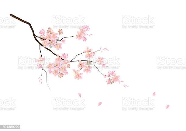 Cherry blossom flowers with branch pink color watercolor look created with art brush ,vector illustration for background  or card