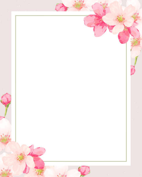 Cherry blossom frame vector cherry blossom/botanical frame/border/background/greeting card/invitation/vector illustration/spring/pink flower/plant invitational stock illustrations