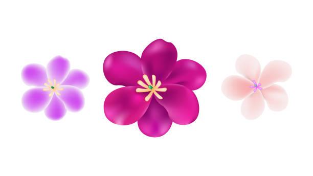 Cherry blossom illustration vector background. Cherry blossom illustration vector background. peach blossom stock illustrations