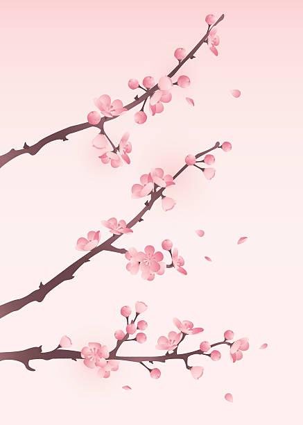 Cherry blossom in spring Vector illustration of oriental cherry blossom plum blossom stock illustrations