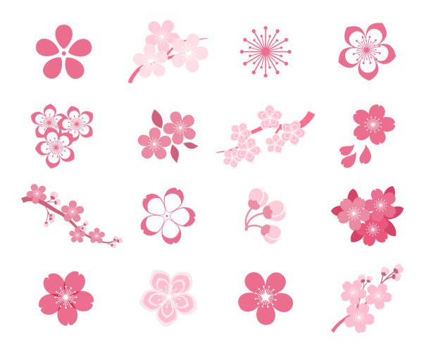 Cherry blossom japanese sakura vector icon set vector art illustration