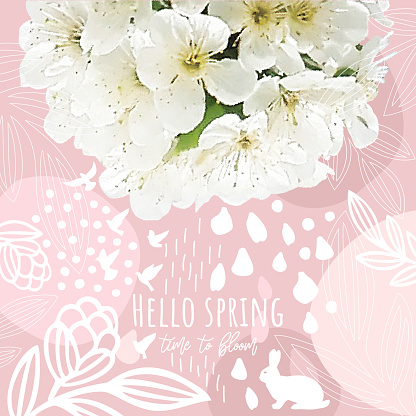 Cherry Blossom On Rose Spring Background