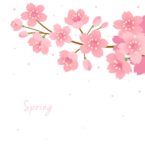 白い背景に咲く桜 - 桜点のイラスト素材/クリップアート素材/マンガ素材/アイコン素材