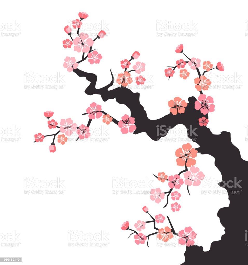 Kirschblüte Auf Weißem Hintergrund Stock Vektor Art und mehr Bilder ...