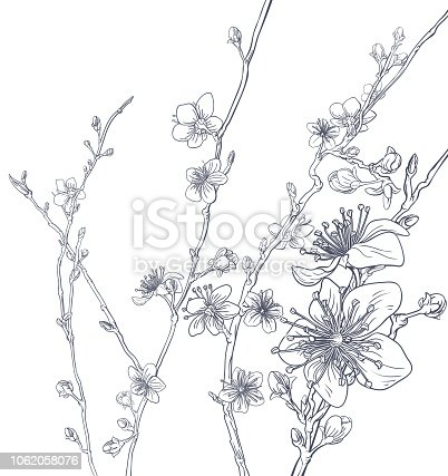 Spring Peach or Cherry blossom flowers background pattern. Abstract Japanese or Chinese style tree branches fashion floral design.