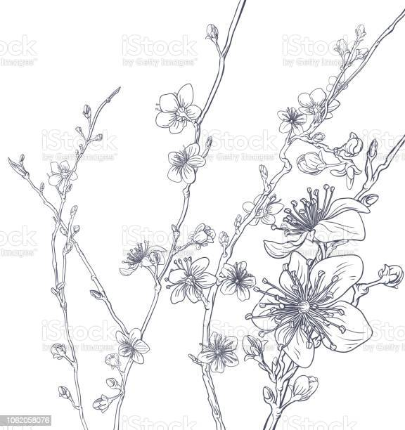 Cherry blossom peach flowers background pattern vector id1062058076?b=1&k=6&m=1062058076&s=612x612&h=ydi1enwckwf qwsb5r4wpz3tk5m2veaf0hj7vwourew=