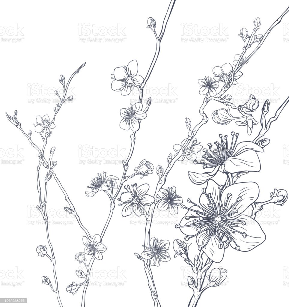 Cherry Blossom Peach Flowers Background Pattern vector art illustration