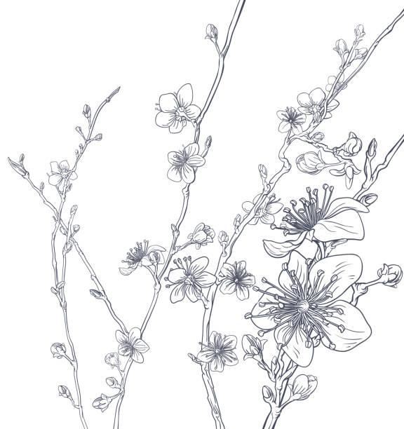 illustrations, cliparts, dessins animés et icônes de motif de fond fleur de cerisier fleurs de pêchers - tatouages asiatiques