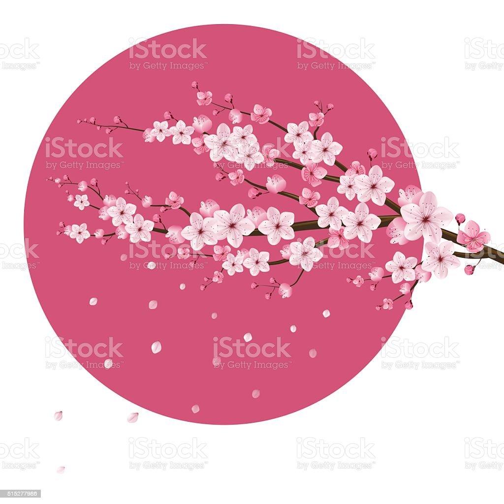 Cerisier En Fleur Vecteur Realiste Japon Cliparts Vectoriels Et