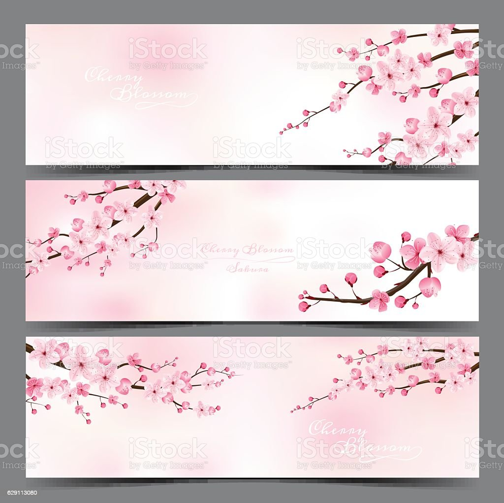 cherry blossom realistic vector, sakura. - Illustration vectorielle