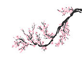 Cherry blossom hand drawn branch with pink cherry flowers blooming.  Sakura blossoming twig isolated on white.  Chinese or Japanese traditional drawing. Vector.