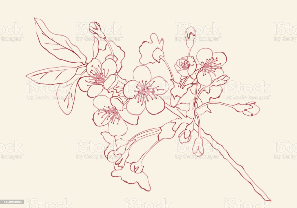 Cherry blossom sketch style vector illustration. Cherry blossom hand drawn sketch imitation.