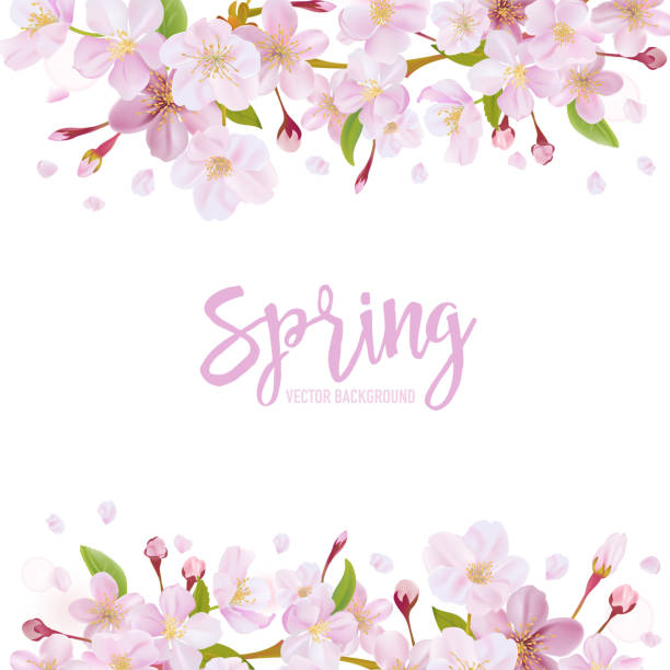 Cherry Blossom Spring Background vector art illustration
