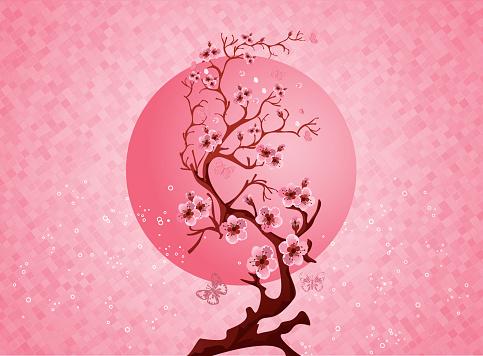 Cherry blossom spring nature scene
