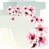 Illustration of a cherry blossom - sakura. Flowers, branch and background are grouped and layered separately.