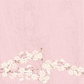 Cherry Blossom on pink wooden background. Vector. EPS 8.