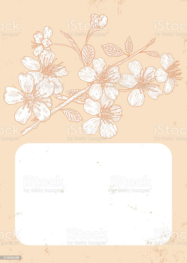 Cherry blossom vector art illustration