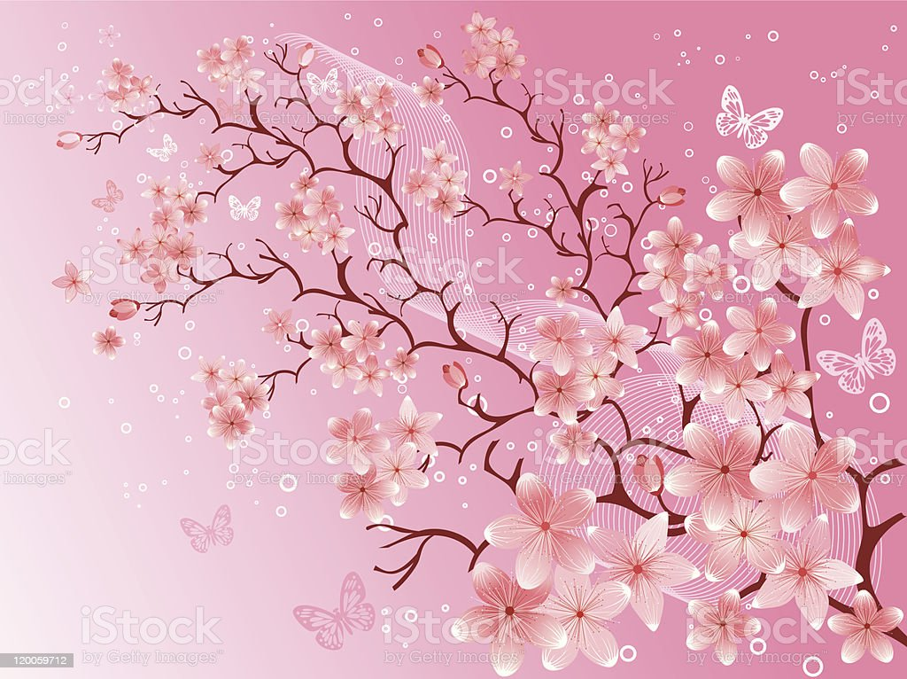 cherry blossom,  vector illustration royalty-free stock vector art