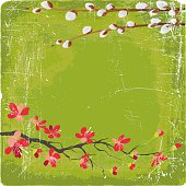 Cherry Blossoms and Pussywillow branches on green grunge background