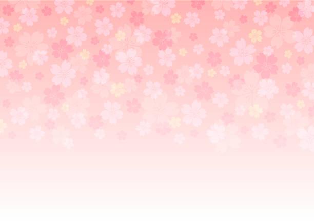 ilustrações de stock, clip art, desenhos animados e ícones de cherry blossoms background illustration. spring season banner. - cherry blossoms