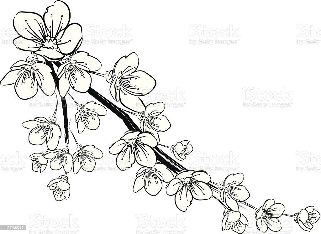 Cherry Blossoms Black And White Stock Illustration ...