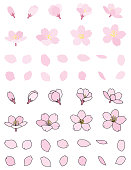Cherry blossoms bud petal