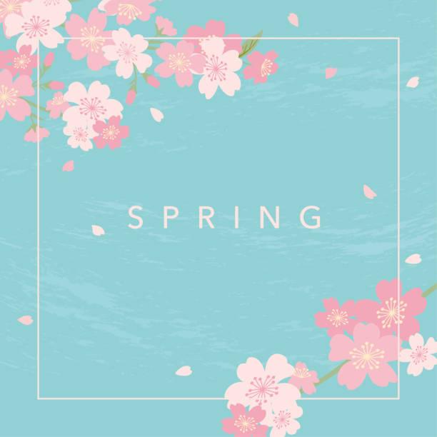 ilustrações de stock, clip art, desenhos animados e ícones de cherry blossoms illustration on blue background - cherry blossoms
