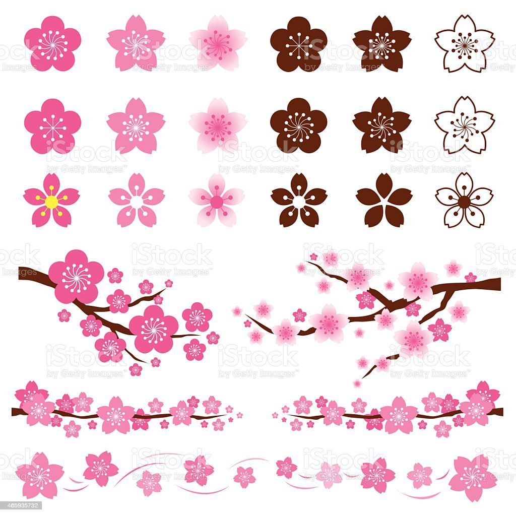 Cherry Blossoms or Sakura flowers Ornament vector art illustration