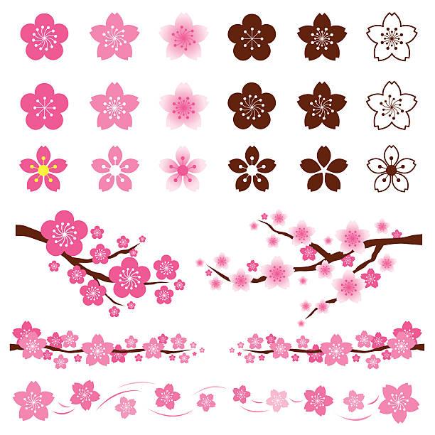 ilustrações de stock, clip art, desenhos animados e ícones de kirschblüten ou sakura flores emblema de - cherry blossoms
