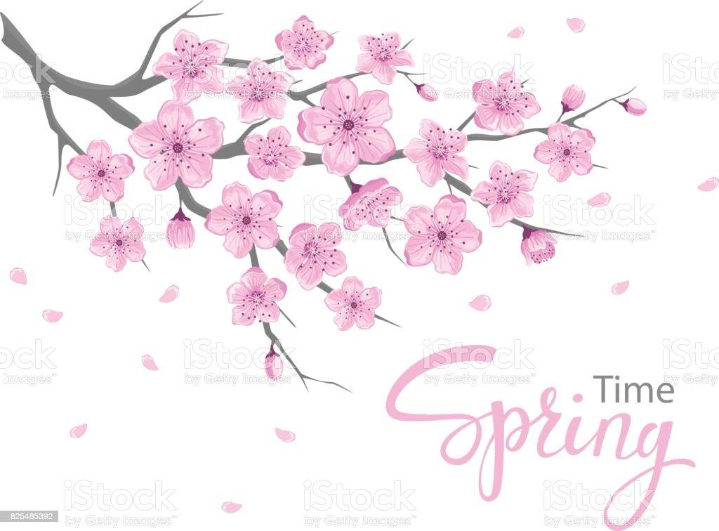 Kirschblüten von asiatischWas Online-Dating-Website ist kostenlos