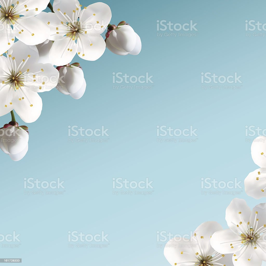 Cherry Blossoms royalty-free stock vector art