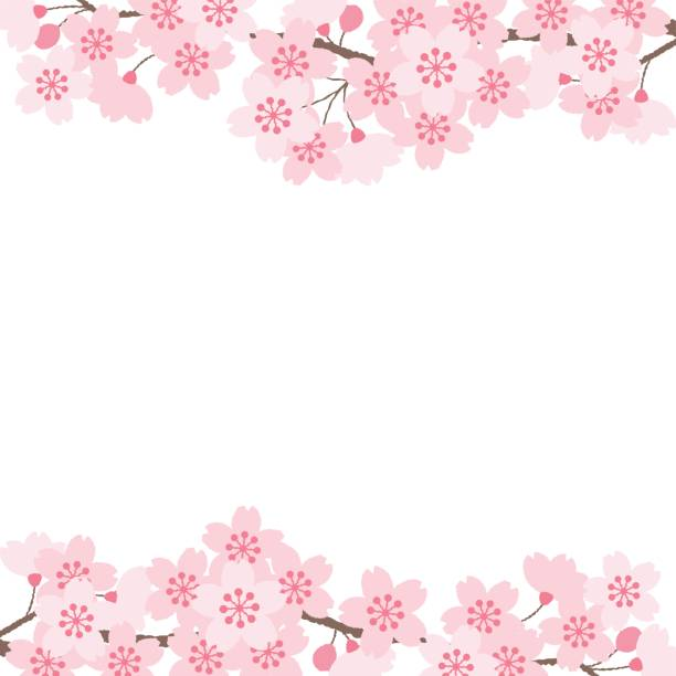 ilustrações de stock, clip art, desenhos animados e ícones de kirschblüten - cherry blossoms