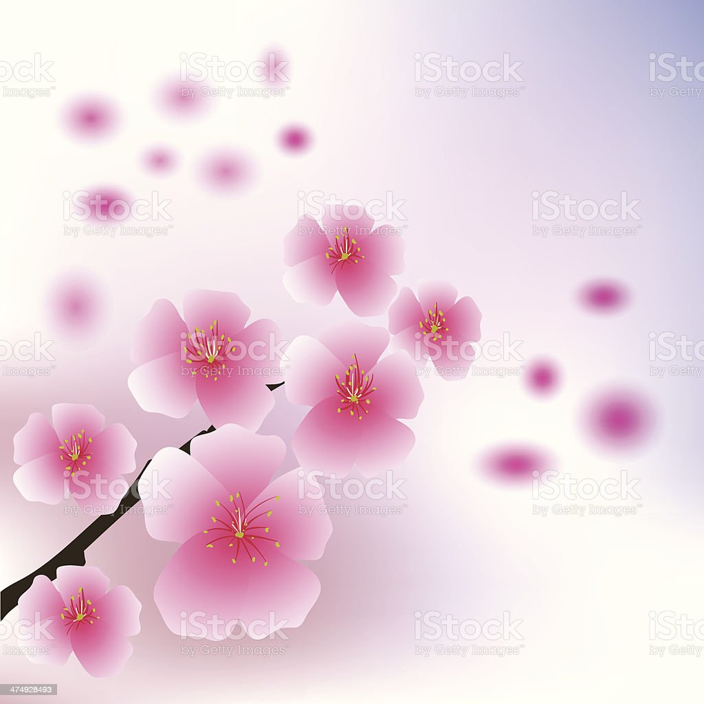 cherry flowers royalty-free stock vector art