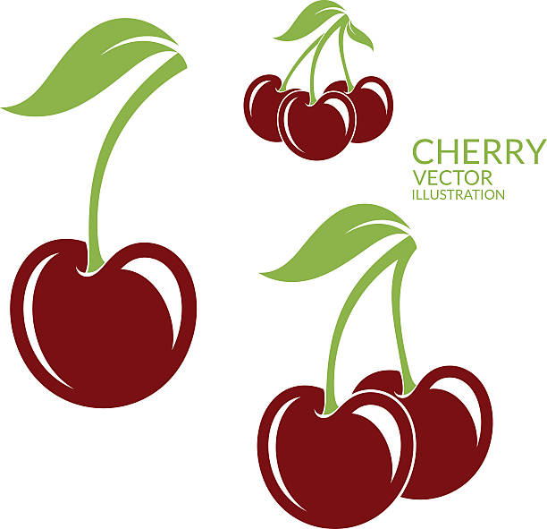 Cherry. Isolated berries on white background (EPS) + ZIP - alternate file (CDR)  cherry stock illustrations