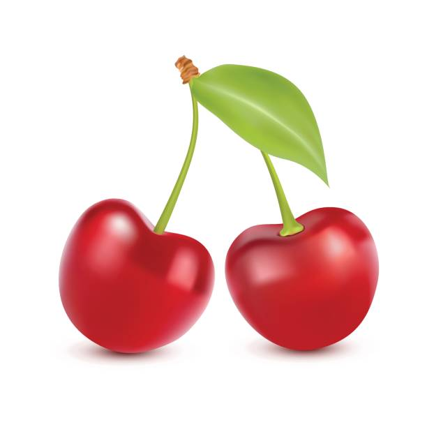 Cherry isolated on white. Sweet fruit. Realistic vector illustration Cherry isolated on white. Sweet fruit. Realistic illustration cherry stock illustrations