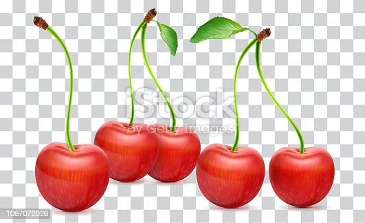 Illustration of a cherry Isolated on Background