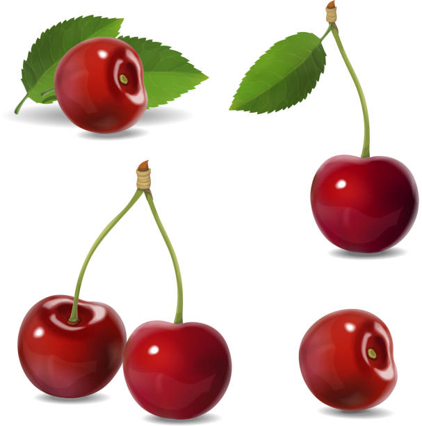 Cherry realistic fruit vector icons set. isolated illustration Cherry realistic fruit vector icons set. isolated illustration. cherry stock illustrations