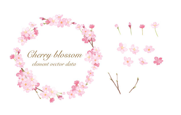 チェリーラウンドフレームと要素水彩イラストトレースベクトル - 桜点のイラスト素材/クリップアート素材/マンガ素材/アイコン素材